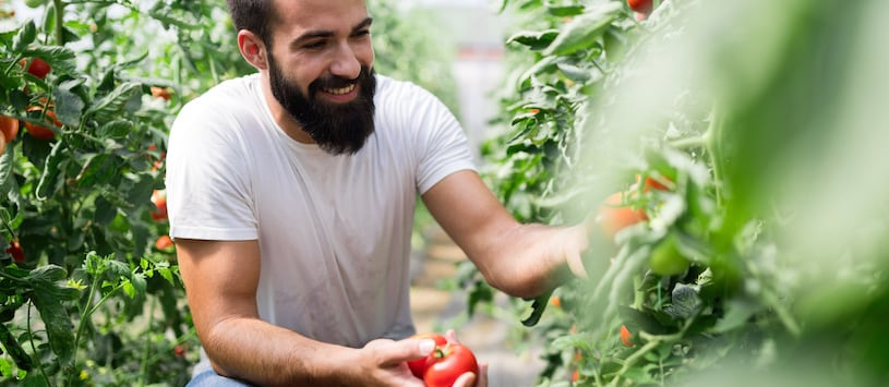 A smiling man picking tomatoes. Take Professional Holistic Nutrition Degree Programs at Hawthorn.